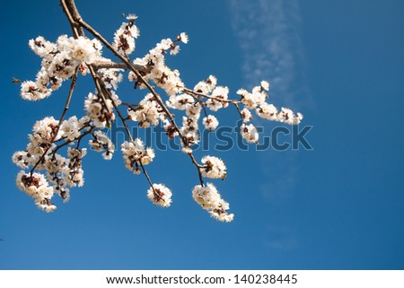 Beautiful flowers with blue sky  Background with flowers on a spring day. - stock photo