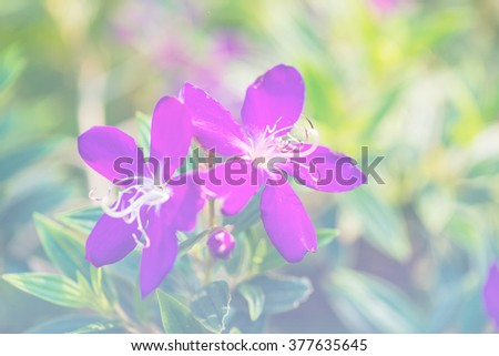 Beautiful flowers with soft focus and color filters, close-up flower background. - stock photo