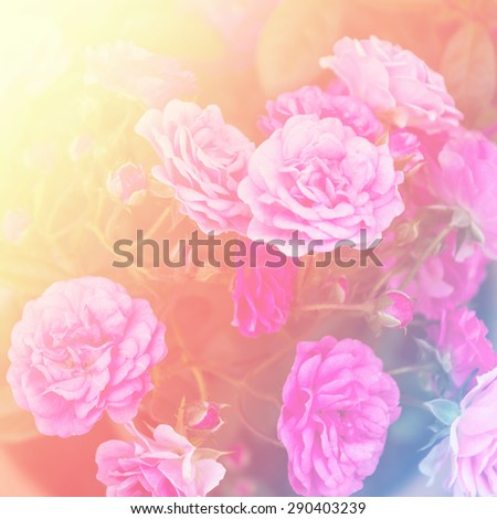 Beautiful flowers with Soft Focus Color Filtered background.