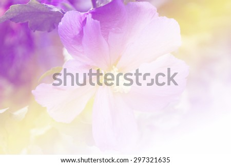 beautiful flowers with Soft Focus Color Filtered background