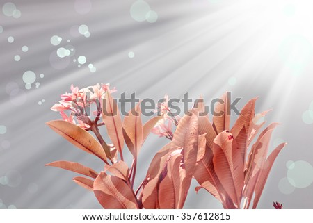 Beautiful flowers with the leaves in the sunshine, vintage retro hipster image with summer bloom. Pink plumeria flowers. Pink Spring blossom - stock photo