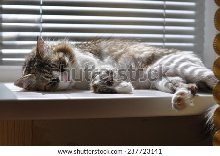 Beautiful Fluffy Cat - stock photo