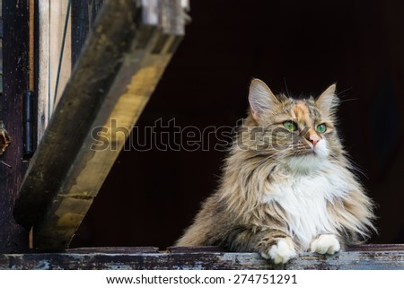 Beautiful fluffy cat with green eyes in the open window - stock photo