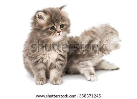 beautiful fluffy kittens on a white background - stock photo
