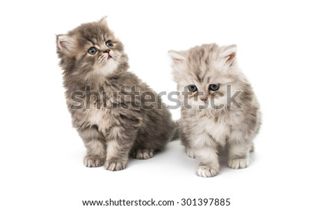 beautiful fluffy little kittens on a white background - stock photo