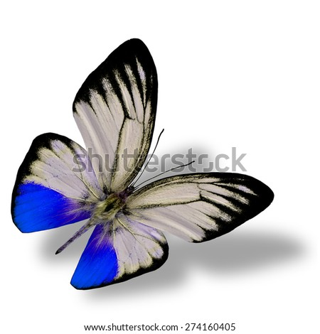 Beautiful flying blue butterfly on white background with nice soft shadow beneath - stock photo