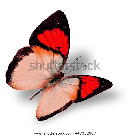 Beautiful flying bright red butterfly, yellow orange tip butterfly in fancy color transparency with soft shadow beneath - stock photo