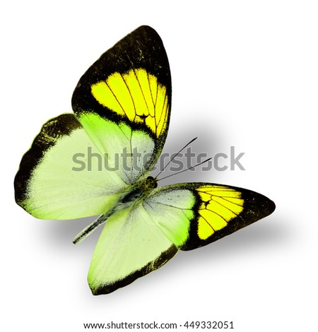 Beautiful flying bright yellow butterfly, yellow orange tip butterfly in fancy color transparency with soft shadow beneath - stock photo