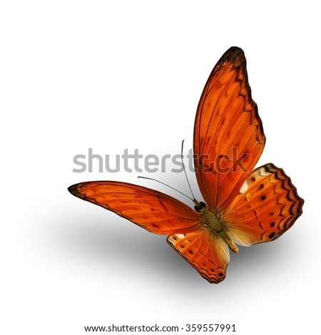 Beautiful flying Common Yeoman Butterfly (Cirrochroa tyche) in natural color profile on white background with soft shadow beneath - stock photo