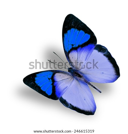 Beautiful flying fancy blue butterfly (orange tip butterfly), with soft shadow beneath - stock photo
