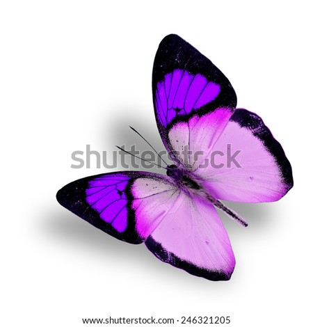 Beautiful flying fancy purple butterfly (orange tip butterfly), with soft shadow beneath - stock photo