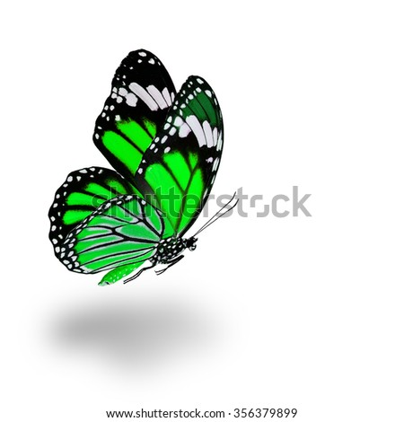 Beautiful flying green butterfly with soft shadow beneath on white background - stock photo