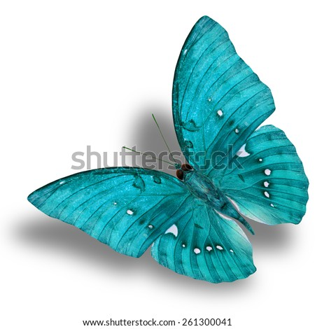 Beautiful Flying Light Blue Butterfly (Great Marquis) with nice shadow beneath isolated on white background - stock photo