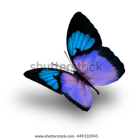 Beautiful flying light blue butterfly, the Yellow Orange Tip (Ixias pyrene) in fancy color profile on white background with soft shadow beneath - stock photo
