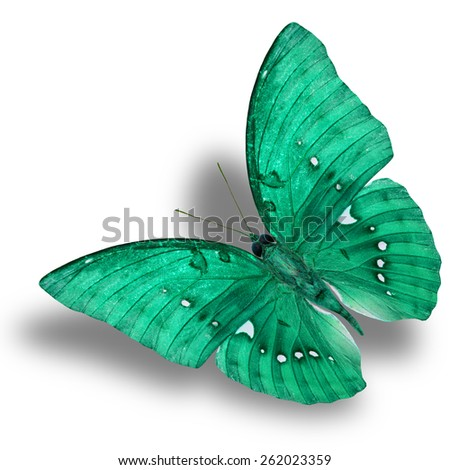 Beautiful Flying Light Green Butterfly (Great Marquis) with nice shadow beneath isolated on white background - stock photo
