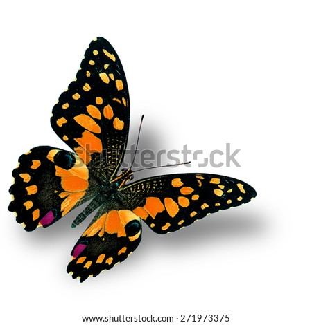 Beautiful flying orange butterfly, the colorful Lime butterfly in fancy color profile - stock photo