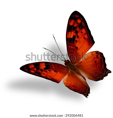 Beautiful flying orange butterfly, The Vagrant Butterfly stretches its back wings profile in fancy color isolated on white background with soft shadow beneath - stock photo