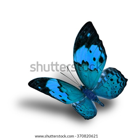Beautiful flying pale blue butterfly, the Rustic butterfly (Cupha bilberg) in fancy color profile with soft shadow beneath - stock photo