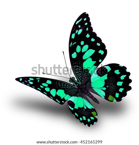 Beautiful flying pale green butterfly, Lime butterfly (Papilio demoleus) in fancy color profile on white background with soft shadow beneath - stock photo