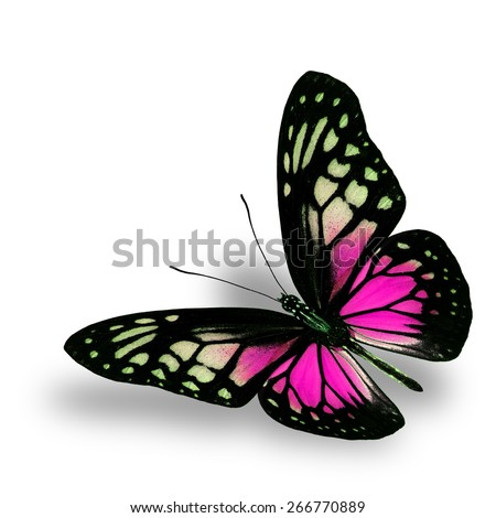 Beautiful Flying Pink Butterfly on white background with soft shadow beneath - stock photo