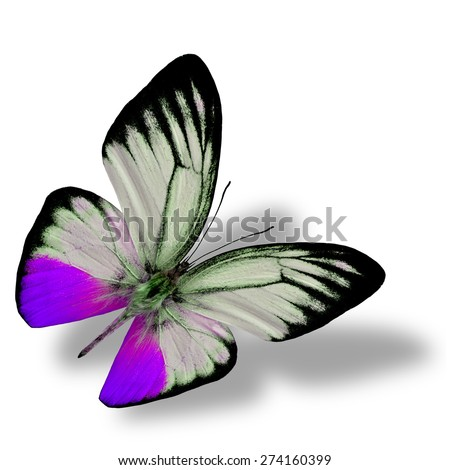 Beautiful flying purple butterfly on white background with nice soft shadow beneath - stock photo
