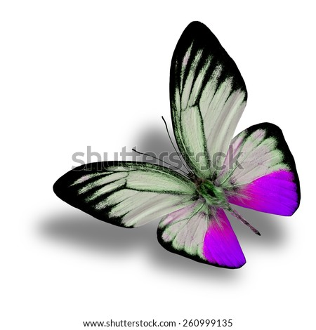 Beautiful Flying Purple Butterfly (Orange Gull in fancy color) with soft shadow beneath isolated on white background - stock photo