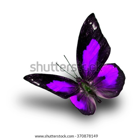 Beautiful flying purple butterfly, the Bright Sunbeam or Malayan Sunbeam butterfly in fancy color with shadow beneath on white background - stock photo