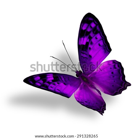 Beautiful flying purple butterfly, The Vagrant Butterfly stretches its back wings profile in fancy color isolated on white bacground with soft shadow beneath - stock photo