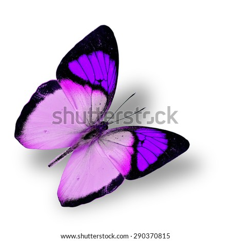 Beautiful flying purple butterfly, yellow orange tip butterfly in color transparency, with soft shadow beneath - stock photo