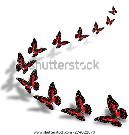 Beautiful flying red butterflies in a great series of taking off with nice shadow beneath - stock photo