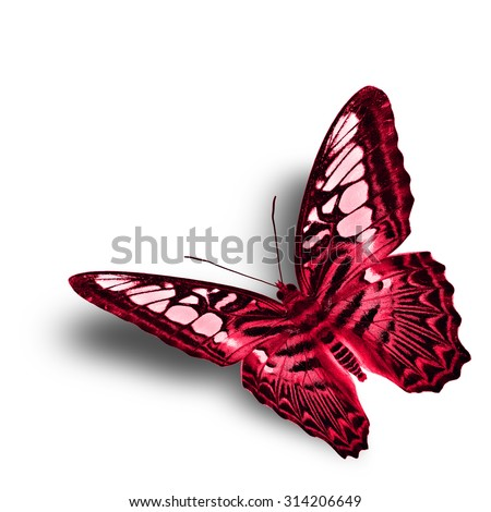 Beautiful flying red butterfly isolated on white background with soft shadow beneath, exotic flying red butterfly - stock photo