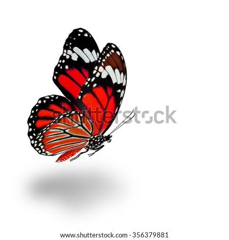 Beautiful flying red butterfly with soft shadow beneath on white background - stock photo