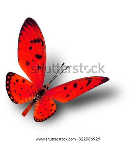Beautiful flying red butterfly with soft shadow beneath on white background, fire butterfly - stock photo