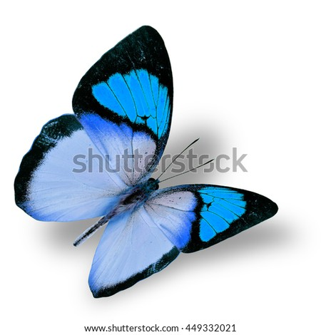 Beautiful flying turquoise blue butterfly, yellow orange tip butterfly in fancy color transparency with soft shadow beneath - stock photo