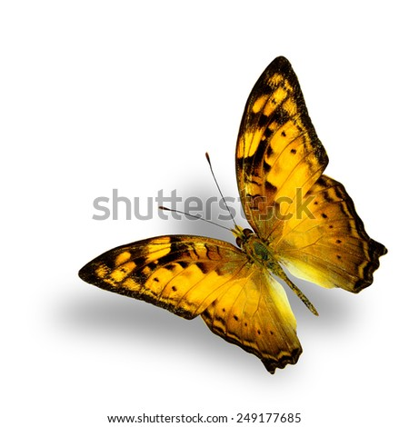 Beautiful Flying Vagrant Butterfly on white background with nice soft shadow - stock photo