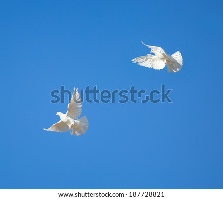 beautiful flying white dove on blue sky background - stock photo