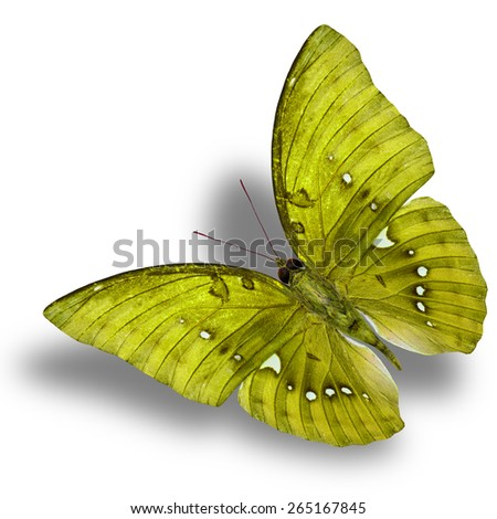Beautiful Flying Yellow Butterfly (Great Marquis) with nice shadow beneath isolated on white background - stock photo