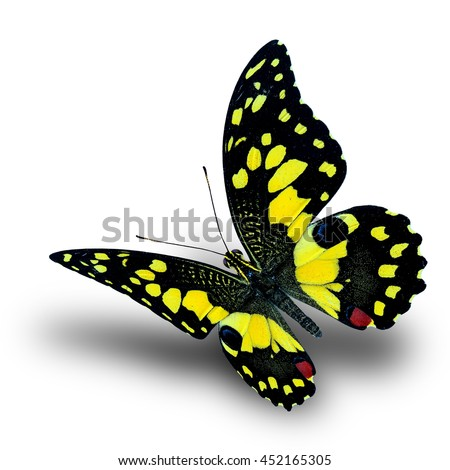 Beautiful flying yellow butterfly, Lime butterfly (Papilio demoleus) a vivid color profile on white background with soft shadow beneath - stock photo