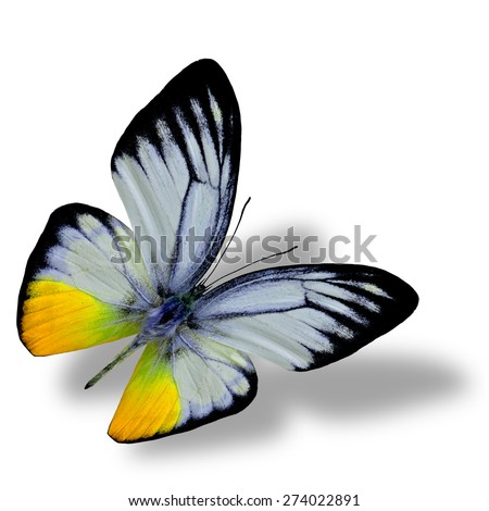 Beautiful flying yellow butterfly on white background with nice soft shadow beneath - stock photo