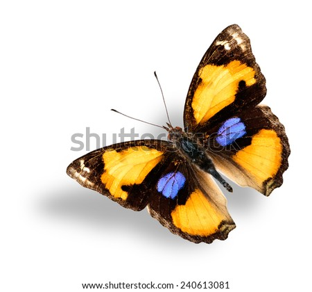 Beautiful Flying Yellow Pansy Butterfly with nice soft shadow beneath - stock photo