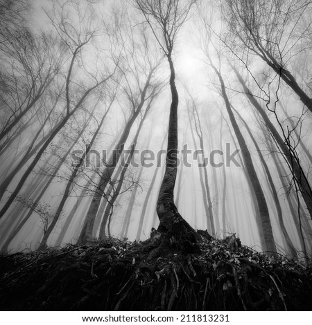Beautiful fog forest - stock photo