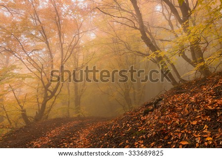 Beautiful foggy autumn forest landscape with fallen leaves - stock photo