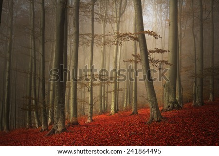 Beautiful foggy forest during an autumn day - stock photo