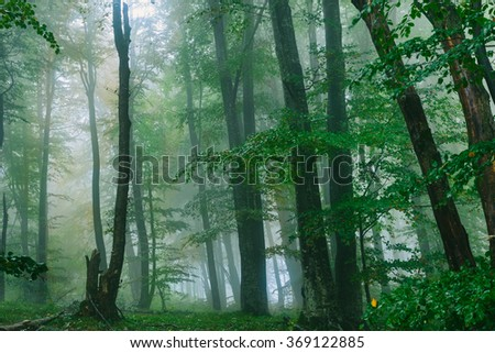 Beautiful foggy forest scene in the Croatian Plitvice National Park