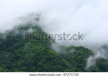 Beautiful foggy green forest after raining in Thailand - stock photo