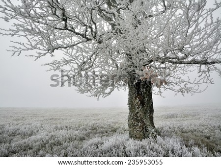 Beautiful foggy landscape with frosted tree - stock photo
