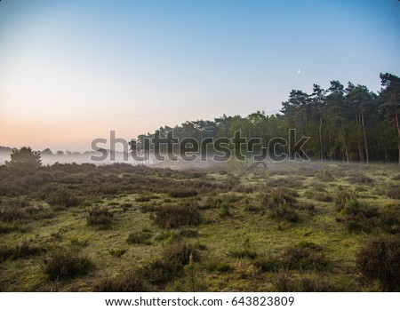 beautiful foggy morning in National park Veluwe