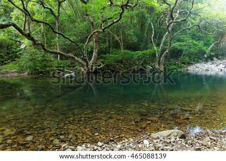 Beautiful forest and water pond