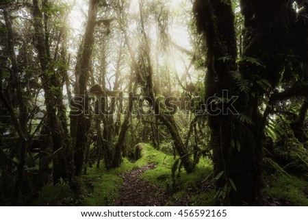 Beautiful forest at Ang Ka nature trail at Doi Inthanon national park, Thailand.
