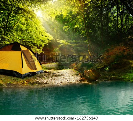 Beautiful forest at noon against the bright sunlight - stock photo